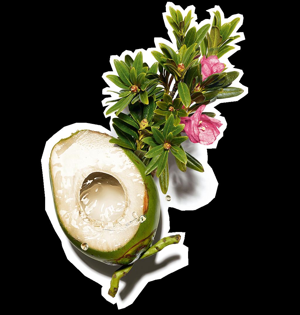 Ingrediente acqua di cocco ed estratto di regina delle alpi