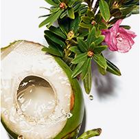 Acqua di cocco et Rosa delle Alpi