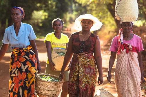 Femmes portant des sacs de plantes à Madagascar
