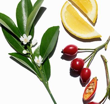 Visual ingredienti e piante