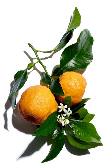 Cera di arancio amaro