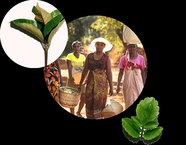 Visual donne che raccolgono piante