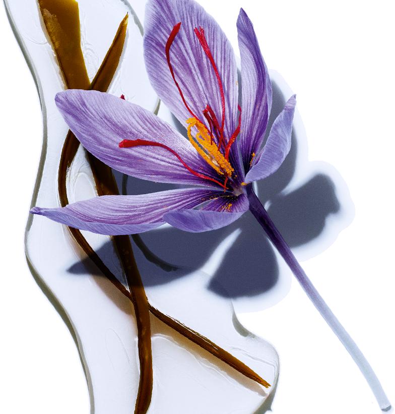 Algues - Fleur de safran bio